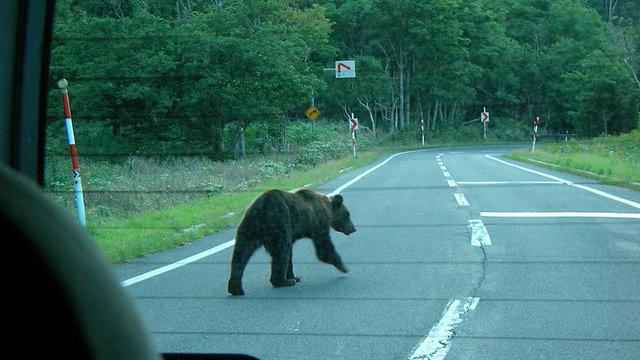 Japan: Das Land der Bären