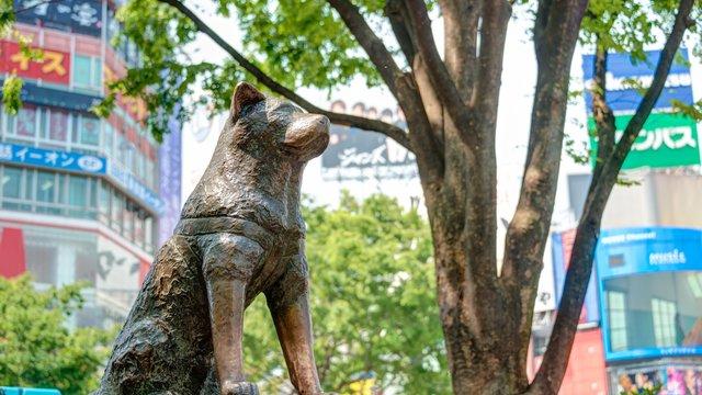 Die Geschichte der Hachiko-Statue von Shibuya