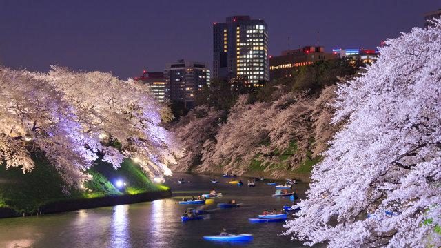 14 schöne Kirschblüten-Spots in Tokio