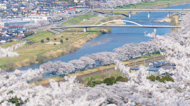 1000 Kirschbäume auf einen Blick