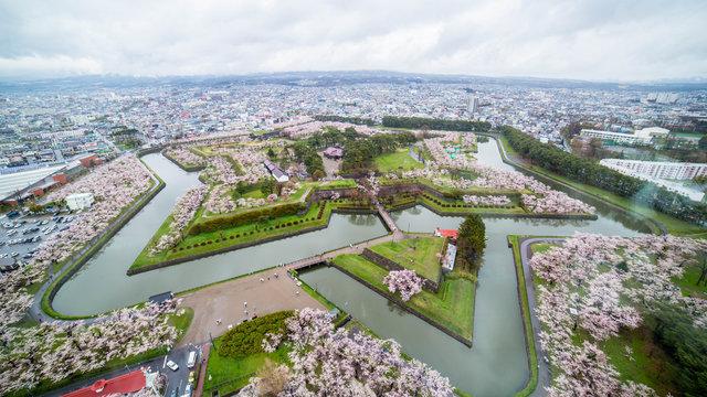 Kirschblüten-Zeit in der Golden-Week