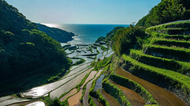 Die schönsten Reisterrassen in Japan
