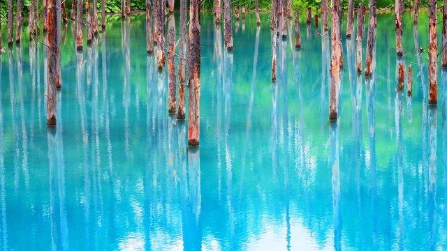 Der blaue Teich, der farbenreiche Herbst & der heilige Schrein