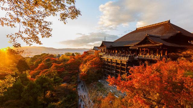 Die erste Herbstlaub-Prognose 2019