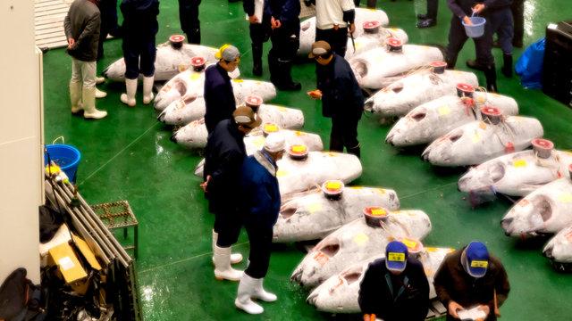 Der Besuch im neuen Fischmarkt von Tokio