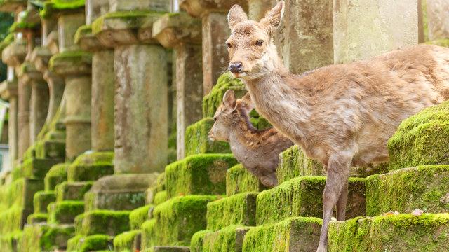 Nara lockt mit einem 30 Prozent Hotel-Rabatt