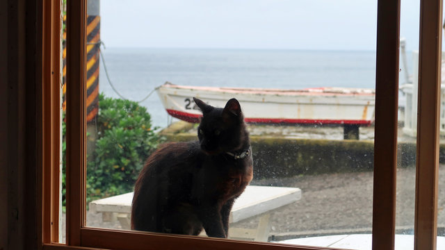 Tashirojima: Die Katzeninsel