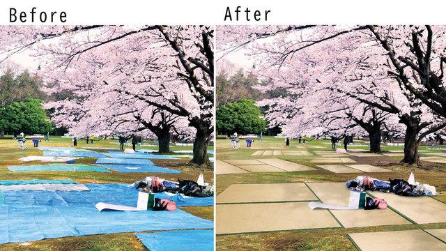 Tatami & Kirschblüten: Ein neues Aussehen für Japans Blumenschau