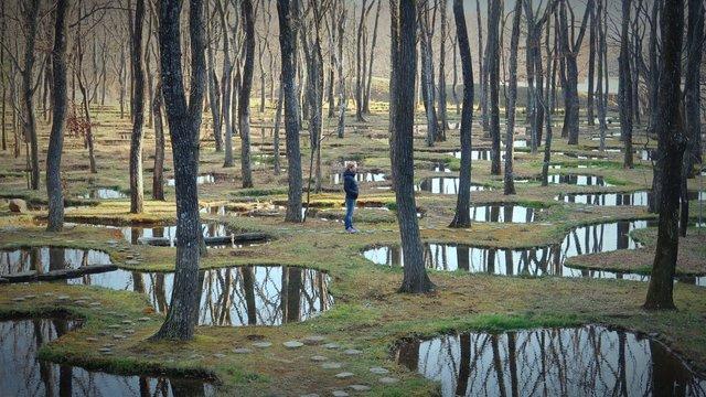 Art Biotop Nasu: Der poetische Wassergarten