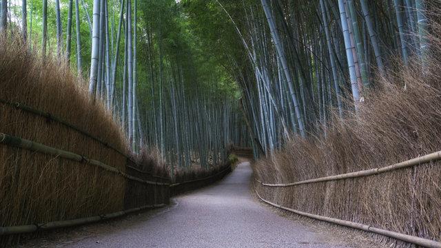 Reiseziel Japan: Der totale Stillstand
