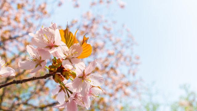 Von der Kirschblüten- in die Regenzeit