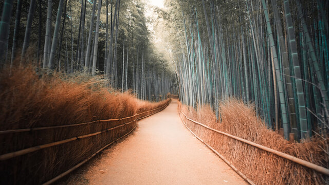Wie Japan den Tourismus retten will