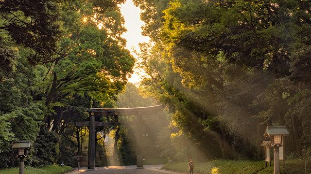 Der 100-jährige Wald mitten in Tokio