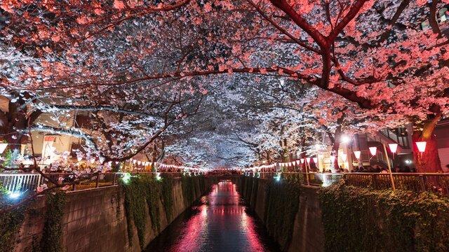 «Rückkehr zur Normalität»: Eine Prognose für Japan