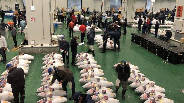 Japans wichtigste Thunfisch-Auktion