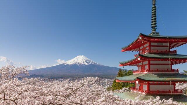 «Sakuranomics»: Der Wirtschaftsmotor Kirschblütenzeit