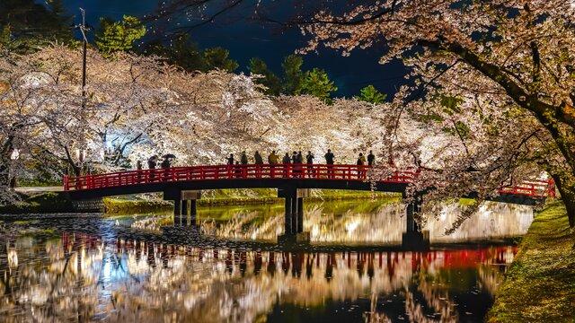 Die Kirschblüten von Hirosaki