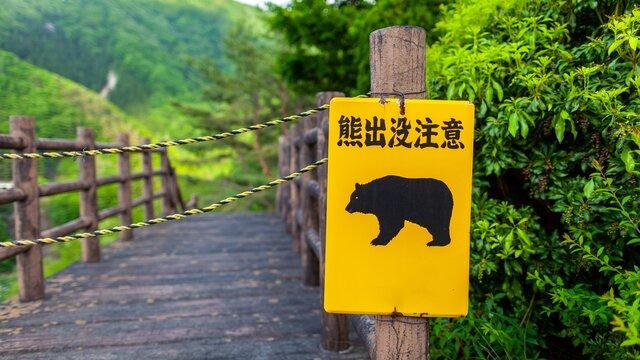 Ein Bär mitten in Sapporo