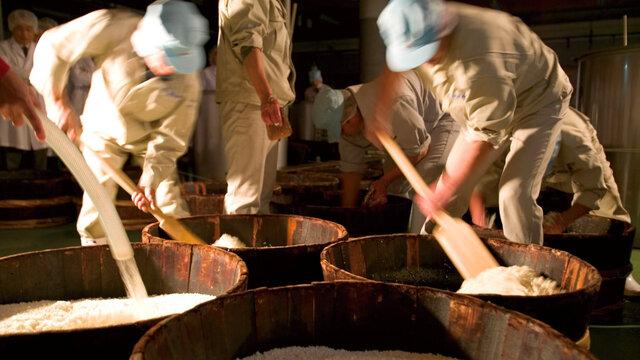 shizuku: Diese Japan-Reise findet statt, mit Sake!